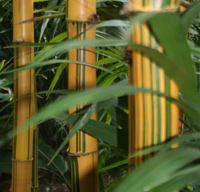 Bamboo Style inside